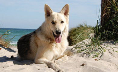 Urlaub mit Hund auf Föhr: 4