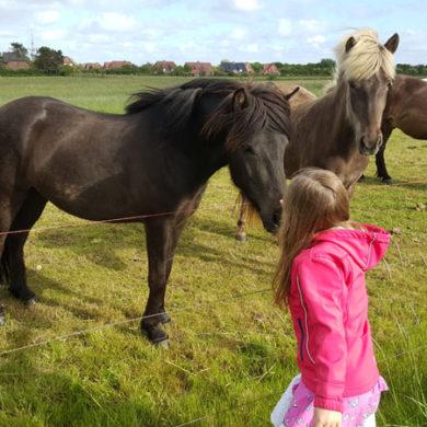 Urlaub mit Pferden